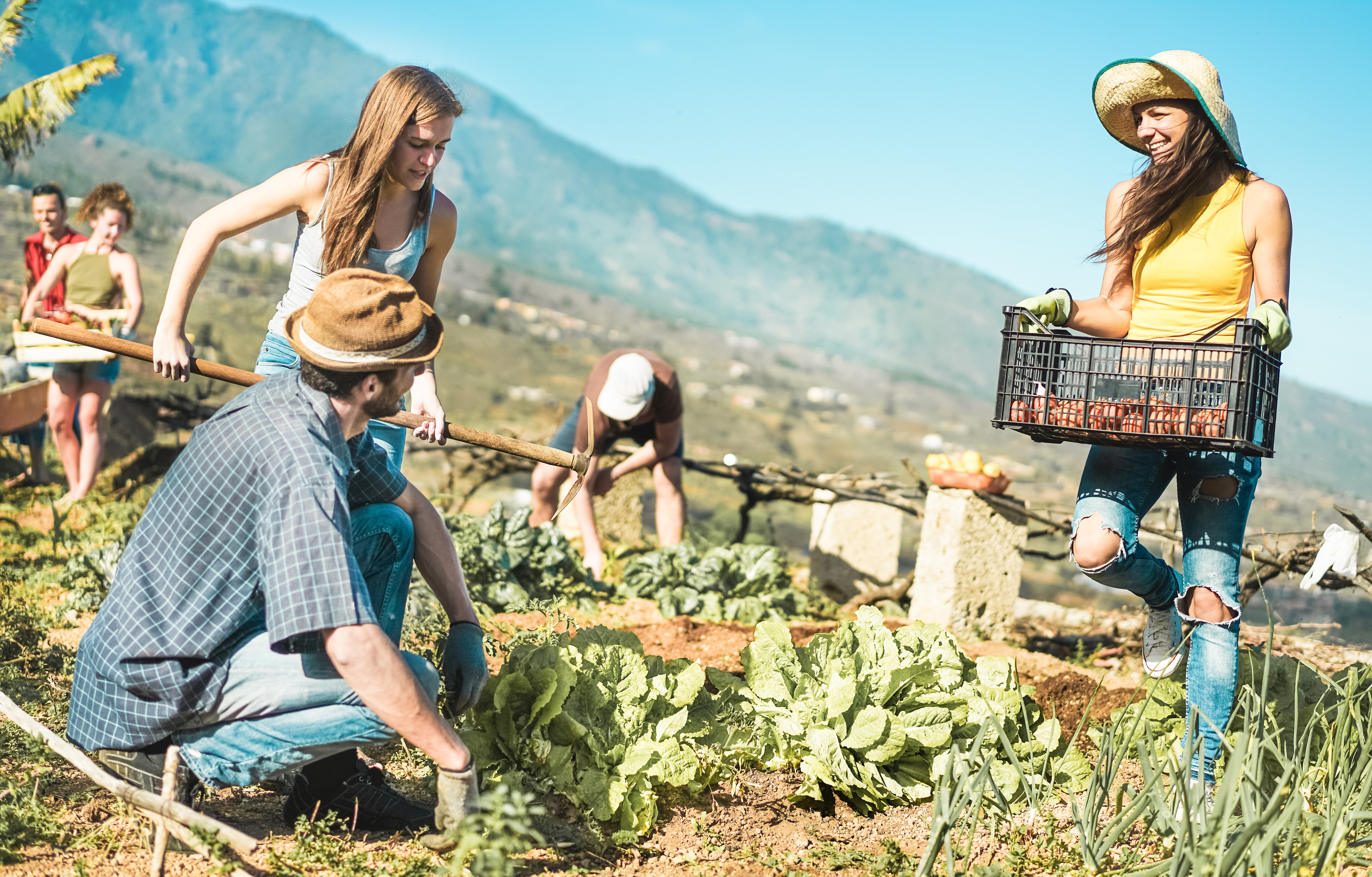 farmarbeit