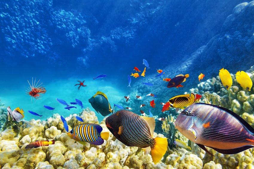 Urlaubsziel Tobago