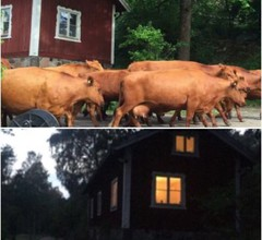 Vegetarisches Öko-b & B im Jagdschloss Tyresta Village 2