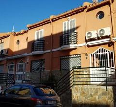 Málaga Ficus 1