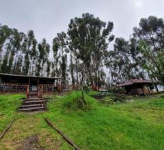 Camp Wildlink 1