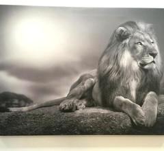 Lions apartment 2