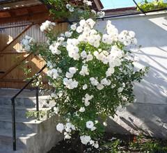 Guesthouse Argacho 2