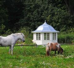Ferienwohnung für 2 Personen (50 Quadratmeter) in Walkendorf 1