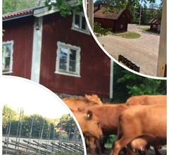 Vegetarisches Öko-b & B im Jagdschloss Tyresta Village 1