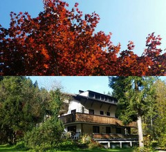 The Treehouse Backpacker Hostel 2