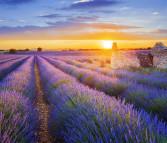 Ferienhäuser mit Garten in der Provence